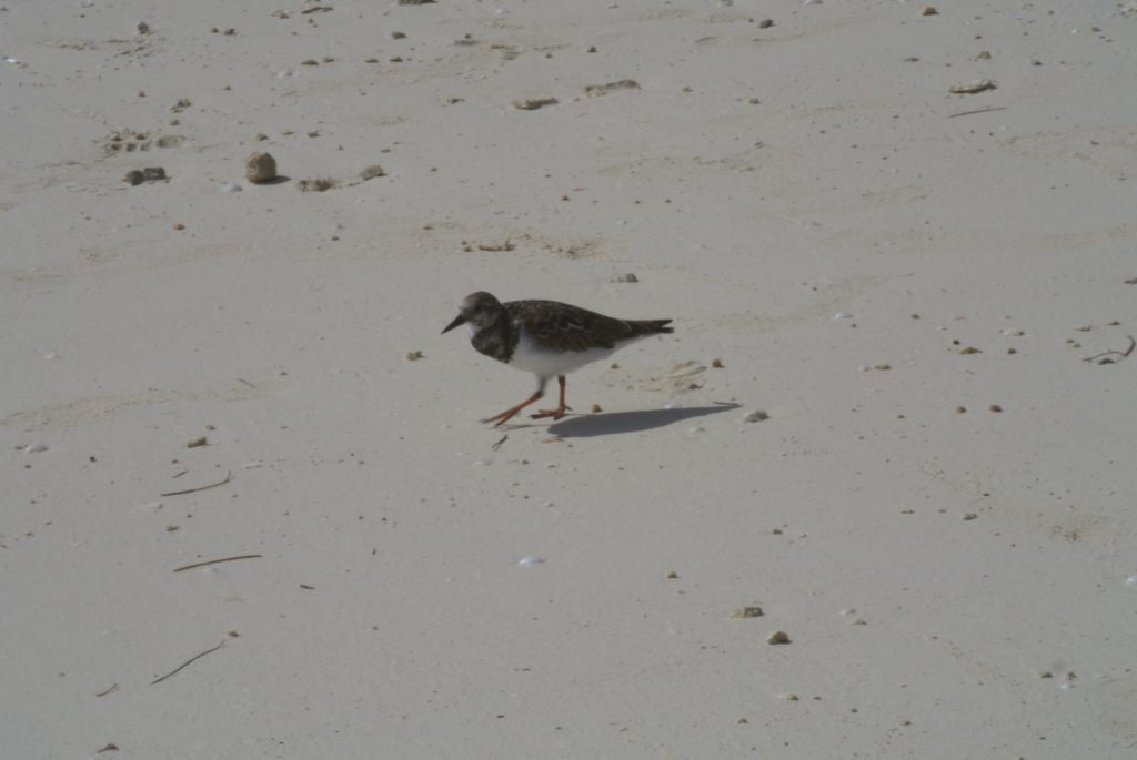 A little bird on the beach