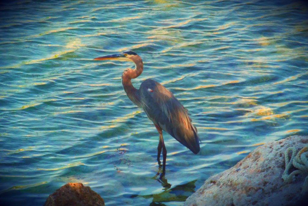 A bird in front of rippled water. There's a filter applied that vastly increases the contrast.